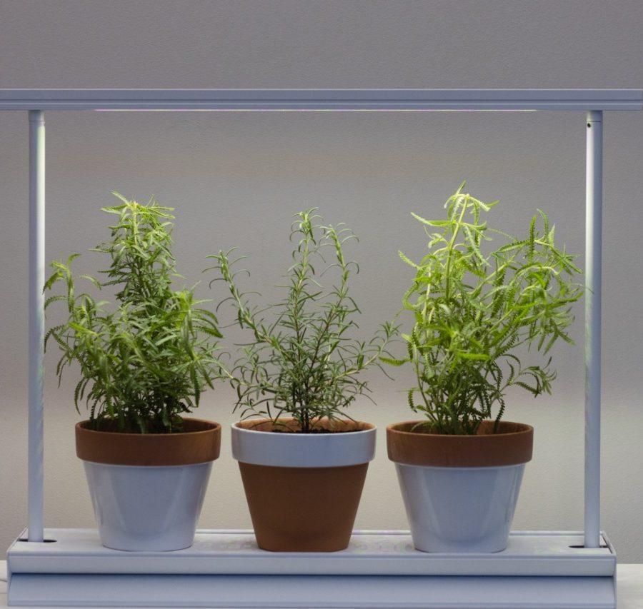 Biofilia e Iluminação para vegetação